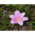 Chipley: a little flower that grew all alone in my backyard.,