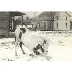 Albion: a picture taken between 95 &97 1ST ave in Albion, Pa. Horse owned by Carl A. Craig