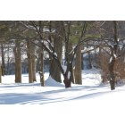 Vienna: The Southside Park's natural beauty... Trees sleeping in the snow...