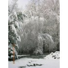 Cottageville: Weeping Willow/Pond