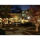 Gainesville: Downtown Christmas Scene