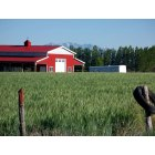 Genola: This is a picture of my neighbor's barn, just around the block. In the summer everything looks fairly green and the colors seem especially bright.