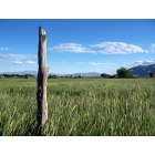 Genola: Just one of many fence posts in the Genola--we are, afterall, a fairly rural area, and the easiest way to mark a property line is with a fence post.