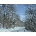 Excelsior Springs: Surrounding snowy trees