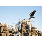 Idaho Falls: Idaho Falls Sculpture - Bald Eagle feeding her two chicks (eaglets). Photo taken on Easter Sunday 2010.