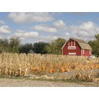 Idaho Falls: A pumpkin patch close to home, in fact it is located on the road behind the Idaho Fall Zoo. It is a great place to take your family to pick pumpkins from the vines. It is a beautiful spot to capture a photo with your family and create many memories.