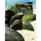 Sea Cliff: Mossy rocks at Tappan Beach