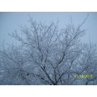Yankton: Winter 2010 - Silver Beauty - River Side Park