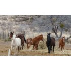 Fort Davis: beautiful horses Ft. Davis, TX