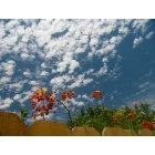 El Centro: Birds of Paradise and Popcorn Clouds in an El Centro backyard