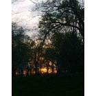 Muncie: sunset through the trees at white river