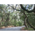 Fernandina Beach: Fort Clinch Roadway