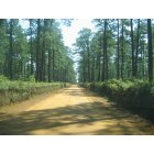 Thomasville: Just another beautiful country back road