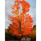 Windham: Fall foliage on Kendall Pond Road