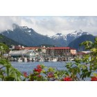 Sitka: Sitka in bloom