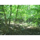 Mahopac: Woods in Mahopac, New York