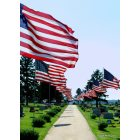 Moville: Memorial Day flags placed in the cemetary honoring those who served from Moville, Iowa