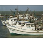 Fulton: Shrimpers, Fulton Harbor
