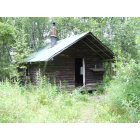Willow: OLD CABIN AT MONTANA CREEK