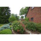 Wyoming: 915 Reily Road - Rose and flower garden, Wyoming, Ohio